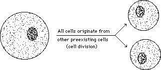 Rudolf Virchow and the cell theory