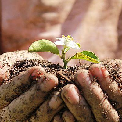 desarrollo sustentable evolucion de el concepto timeline