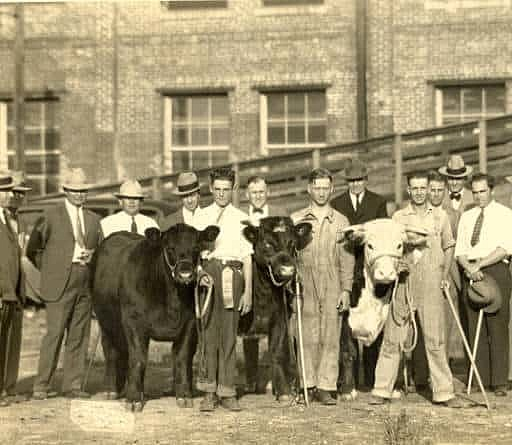 The First National Congress of Vocational Agriculture Students judge a livestock show