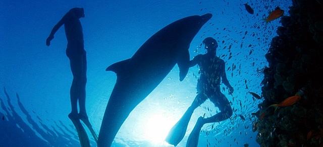 Em banyo amb dofins.