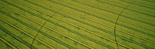 Agriculture: Pioneers grow crops and raise livestock