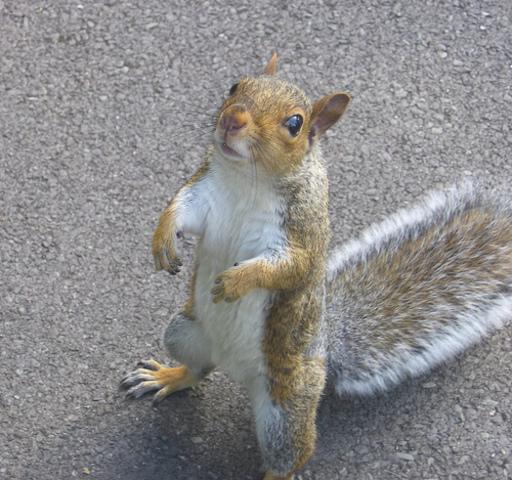 Natural History: Domesticating Squirrels
