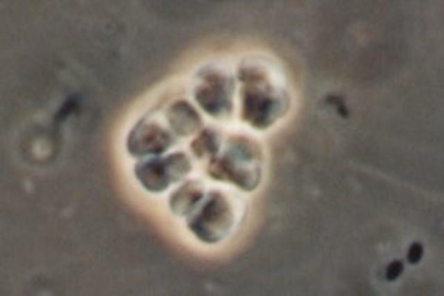 (4 BYA) Life forms on Earth
