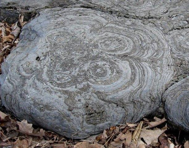 Archaea Fossils (4 BYA)
