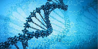 genoma digital