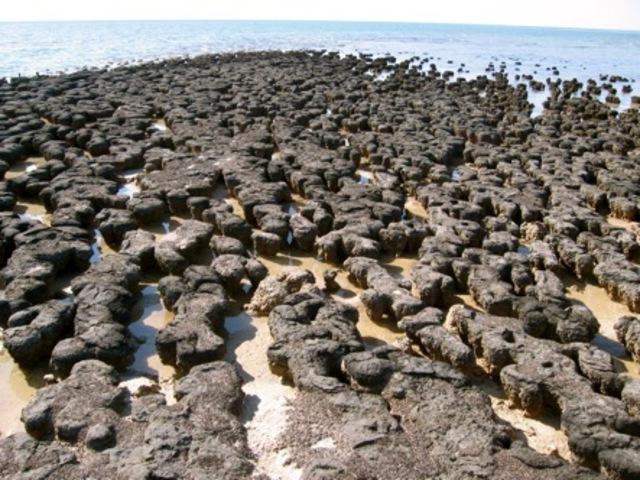 (3.5 BYA) Stromalites