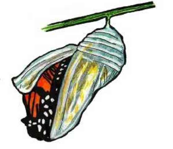 The Chrsalis (Cocoon)