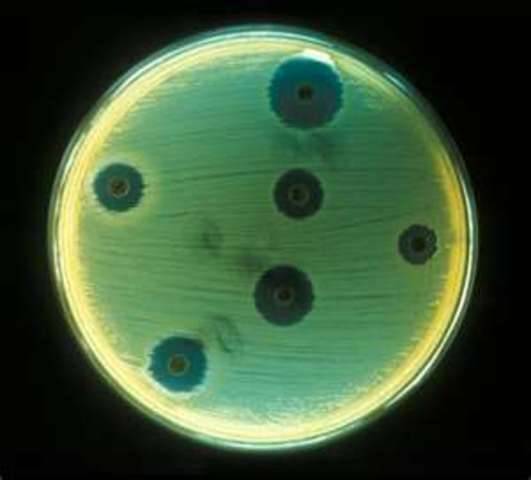 (4 BYA)  Cells are created