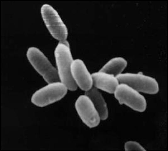 (4 BYA) First Cellular Life