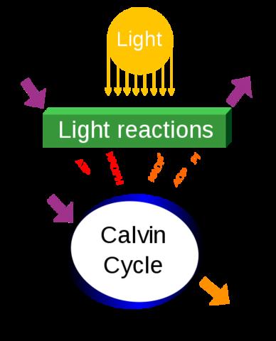 (3 BYA) Life Forms Becoming Photosynthetic