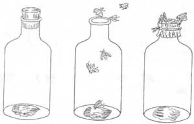 (1668) Redi's Experiment