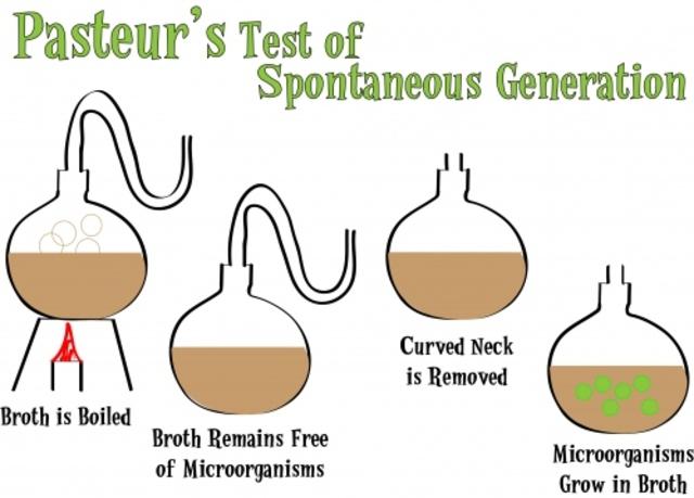 (mid-1800's) Pasteur's Experiment