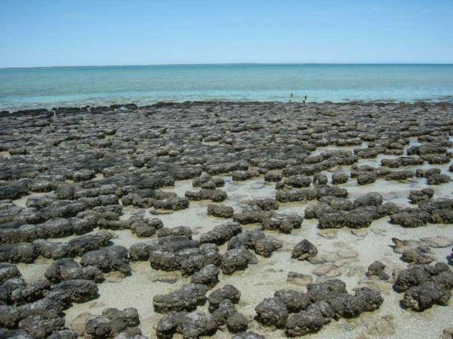 (3.5 Billion Years Ago) Stromatalites Existed