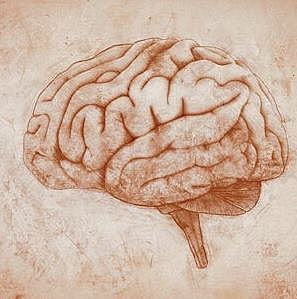 Psicólogos Experimentales