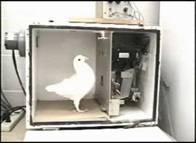 B. F. Skinner, experimento de ¨La superstición de las palomas¨