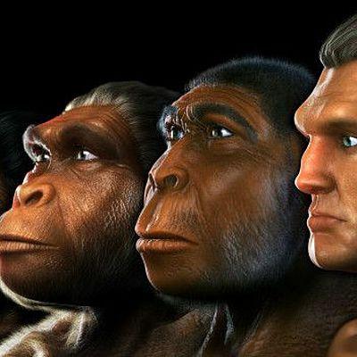 Evolució d'homínids timeline