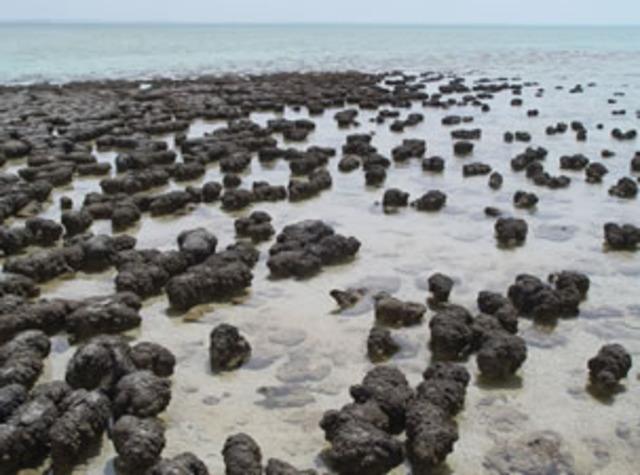 (3.5 BYA) Stromatalites are created