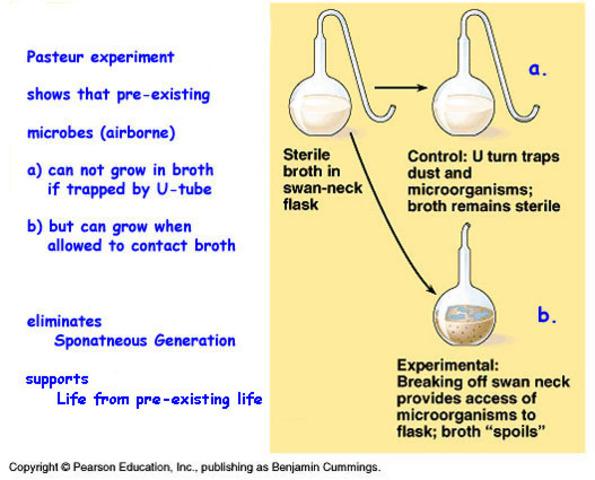 Pasteur's Experiment (mid 1800s)