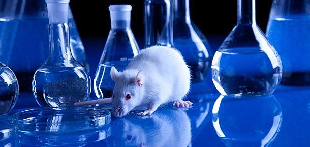 La Rapamicina, logra por primera vez alargar la vida de los ratones.