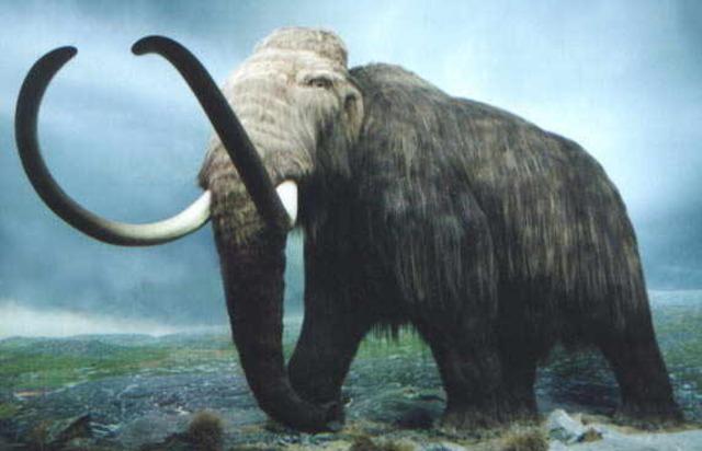 (220 million years ago) Mammals