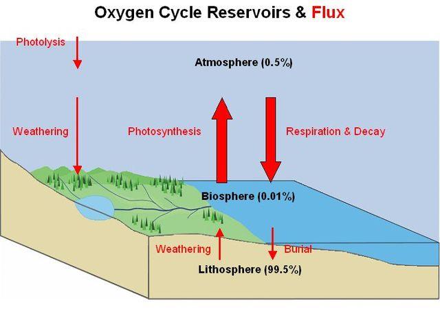 (400 mya) Oxygen nears present day levels