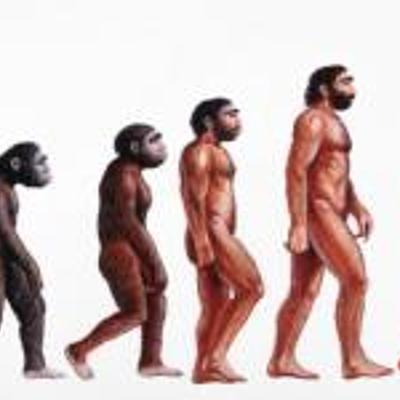 Evolució de la vida a la Terra timeline