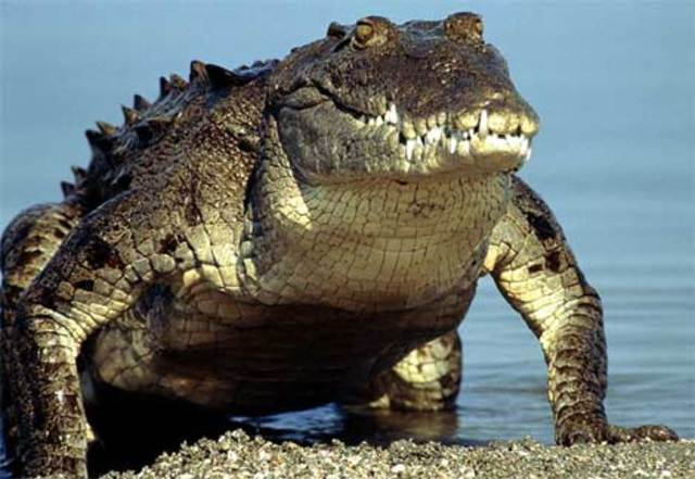 Dinoasaurs mamals and crocodiles (220 mya)
