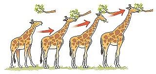 Teoría de evolucionismo según Lamarck