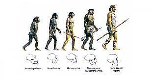 Pensamiento evolucionista