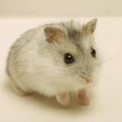 i wanted a hamster