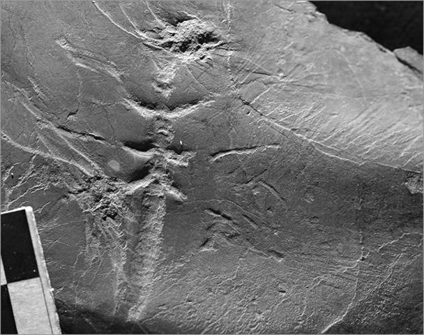 3.5 BYA Oldest fossils,