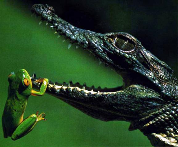 350 mya Reptiles