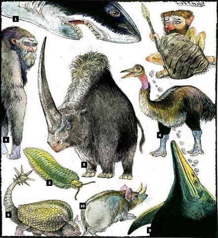 65 mya 60-80 percent of all species go extinct.