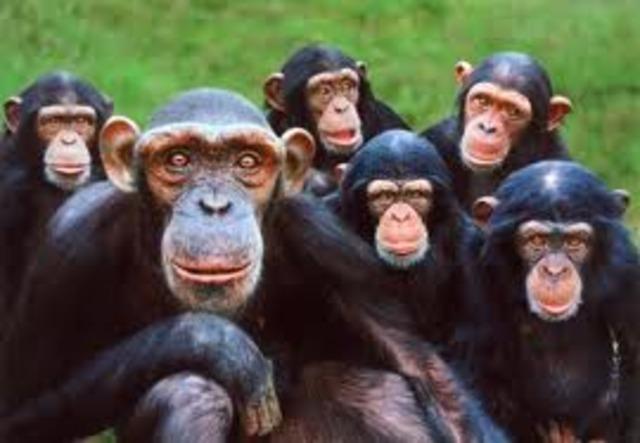 60 mya Primates