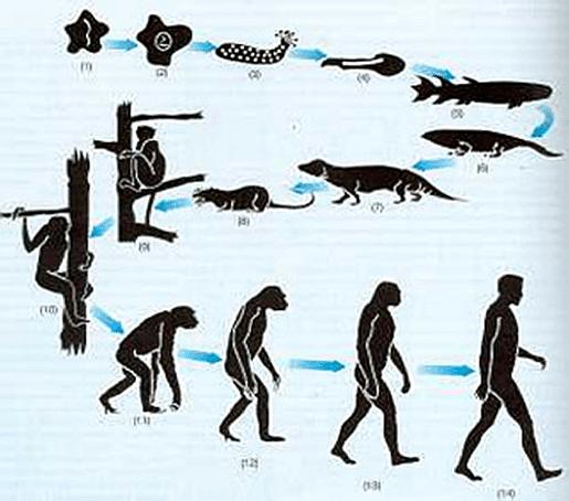 Teoria de la evolucion de la vida (Charles Darwin)