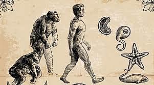 Teoría de la evolución de la vida (Antepasado Común)