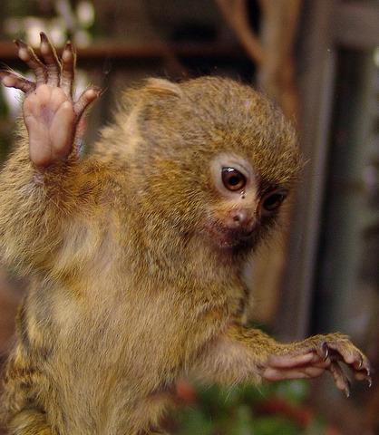 (60 mya) Primates