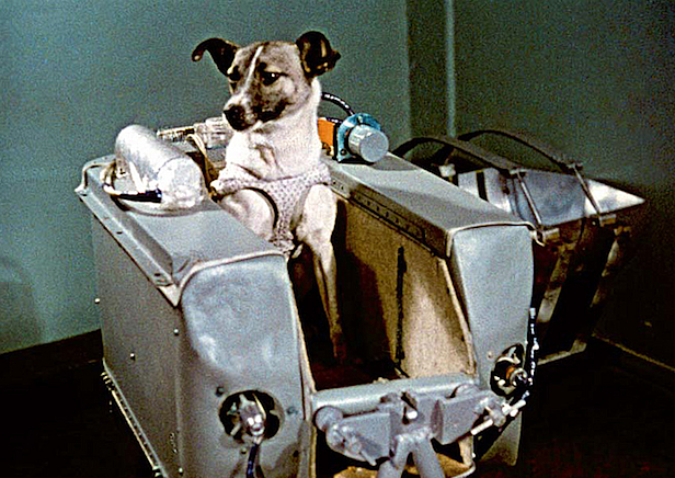 Sputnik 2 carried the first living being into space