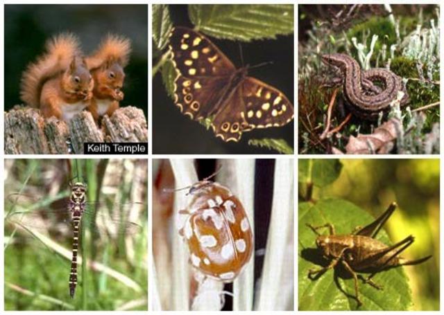 250 mya 90 percent of all species go extinct.