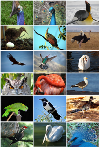 100.00 years All mammals and birds over 45 pound go extinct.