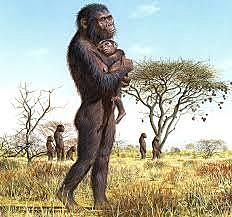 Hominids Appear