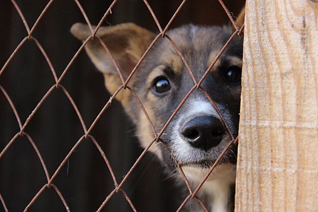 «Ловля собак в Москве»