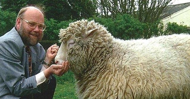 Клонировали овцу Долли