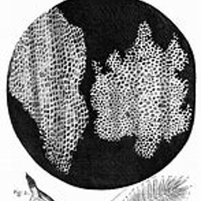 Histoire du microscope et fondements de la théorie cellulaire (BERGON Lila 601) timeline