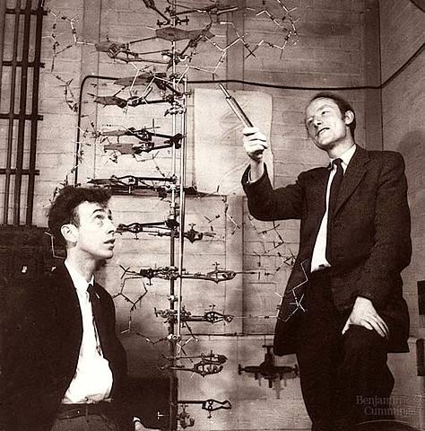 Watson eta Crick-en DNA-ren 3D moduloa