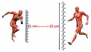Синтез кольцевых молекул