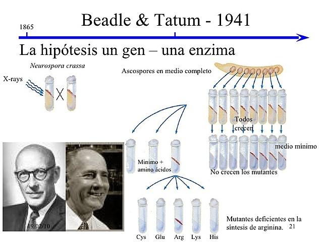 Beadle eta Tatum-en nobel sariak