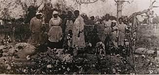 Black slaves begin to appear in censuses