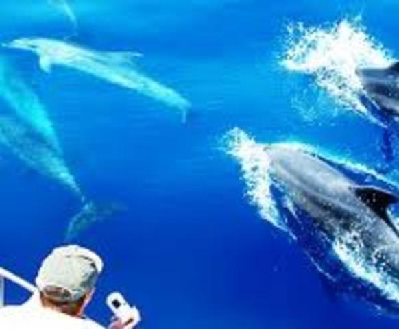 Los Angeles Newport Lnading Whale Watching Phototshoot