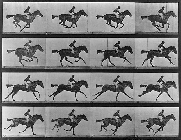 """Prof - Le mouvement / Edward Muybridge - """"Sallie Gardner at a Gallop"""" (série de 24 photographies en noir et blanc)"""